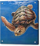 Hatties Release Acrylic Print by Deb LaFogg-Docherty