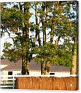 Hay Bales And Trees Acrylic Print by Todd A Blanchard
