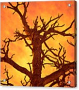 Hell Acrylic Print by Charles Dobbs