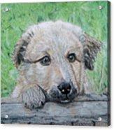 Hello Puppy Acrylic Print by Yvonne Johnstone