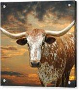 Henly Longhorn Acrylic Print by Robert Anschutz