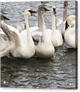 Hey Listen Up Acrylic Print by Laurie With