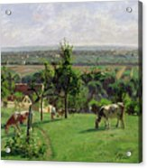 Hillside Of Vesinet Acrylic Print by Camille Pissarro