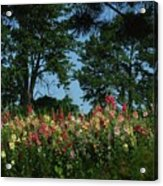 Hollyhocks And Trees Acrylic Print by Michael L Kimble
