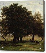 Holm Oaks Acrylic Print by Pierre Etienne Theodore Rousseau
