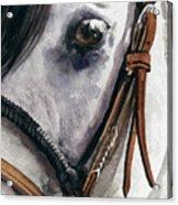 Horse Head Acrylic Print by Nadi Spencer