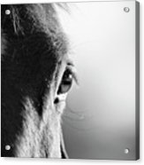 Horse In Black And White Acrylic Print by Malcolm MacGregor
