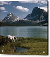 Horses Graze In A Lakeside Meadow Acrylic Print by Walter Meayers Edwards