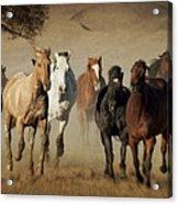 Horses Running Free Acrylic Print by Heather Swan