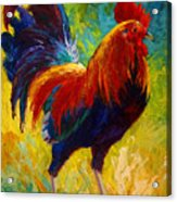 Hot Shot - Rooster Acrylic Print by Marion Rose