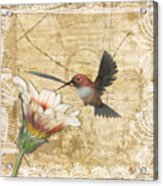 Hummingbird And Wildflower Acrylic Print by Lesley Smitheringale
