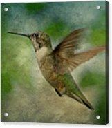 Hummingbird In Flight II Acrylic Print by Sandy Keeton