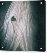 If Wishes Were Horses Acrylic Print by Diana Cochran