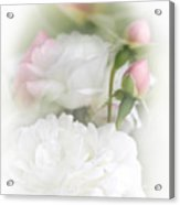 Illusions Of White Roses And Pink Rosebuds Acrylic Print by Jennie Marie Schell