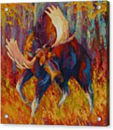 Imminent Charge - Bull Moose Acrylic Print by Marion Rose