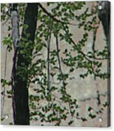 Impression Of Wall And Trees Acrylic Print by Lenore Senior