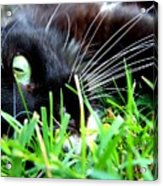 In The Grass Acrylic Print by Jai Johnson