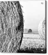 In The Hay -black And White Acrylic Print by Dana Walton