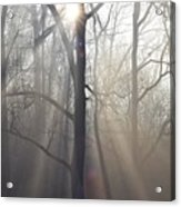 In The Morning Acrylic Print by Bill Cannon