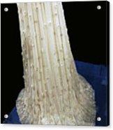 Inaugural Gown Train On Display Acrylic Print by LeeAnn McLaneGoetz McLaneGoetzStudioLLCcom
