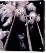 Infrared Palm Trees Acrylic Print by Adam Romanowicz