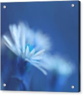 Innocence 11b Acrylic Print by Variance Collections