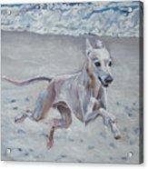 Italian Greyhound On The Beach Acrylic Print by Lee Ann Shepard