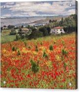 Italian Poppy Field Acrylic Print by Sharon Foster