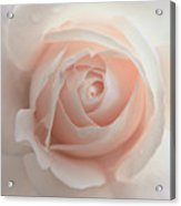 Ivory Peach Pastel Rose Flower Acrylic Print by Jennie Marie Schell