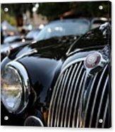 Jaguar Acrylic Print by Wingsdomain Art and Photography