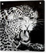 Jaquar II Acrylic Print by Stan Hamilton