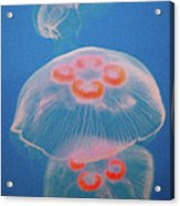 Jellyfish On Blue Acrylic Print by Sally Crossthwaite