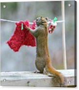 Just Need One More Clothespin Acrylic Print by Nancy Rose
