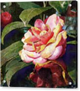 Karma Camellia Acrylic Print by Andrew King