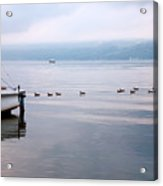 Keep Your Ducks In A Row Acrylic Print by Steven Ainsworth