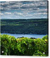 Keuka Vineyard I Acrylic Print by Steven Ainsworth