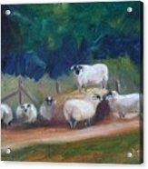 King Of Green Hill Farm Acrylic Print by Donna Tuten