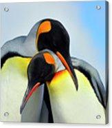 King Penguin Acrylic Print by Tony Beck