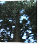 King Tree Acrylic Print by Brad Wilson