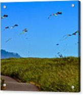Kites Acrylic Print by Robert Bales