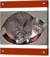Kitty In A Bowl Acrylic Print by Terry Mulligan