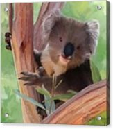 Koala  Painting Acrylic Print by Michael Greenaway