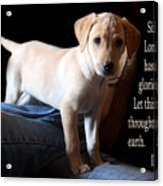 Labadore Puppy Is. 12v5 Acrylic Print by Linda Phelps