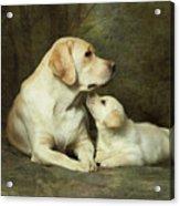 Labrador Dog Breed With Her Puppy Acrylic Print by Sergey Ryumin