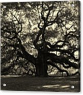 Last Angel Oak 72 Acrylic Print by Susanne Van Hulst