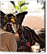 Lazy Dog Acrylic Print by Jim DeLillo