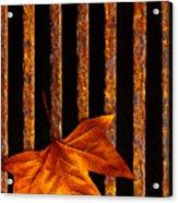 Leaf In Drain Acrylic Print by Carlos Caetano