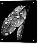 Leaf It Acrylic Print by Karen M Scovill