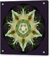 Leafy Mandala Acrylic Print by Rene Crystal