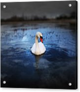 Left Behind Acrylic Print by Svetlana Sewell